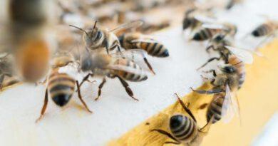 На Тернопільщині чоловіка до смерті покусали бджоли